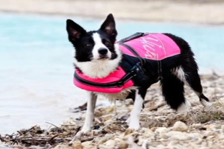 HURTTA – dopřejte svému psovi to nejlepší!