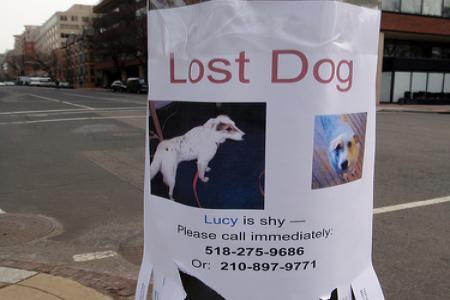 Ztratil se vám pes?