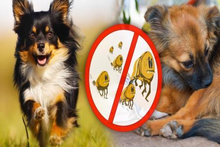 Tipy na nejlepší antiparazitika pro psy
