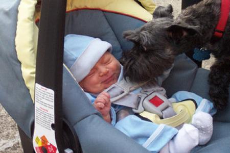 Jak připravit psa na příchod miminka
