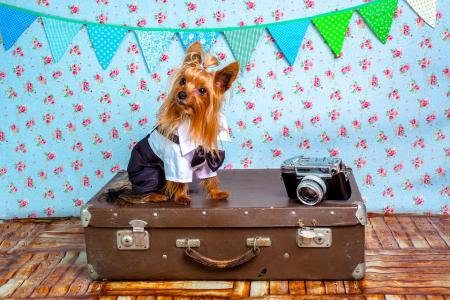 Bezpečné cestování se psem