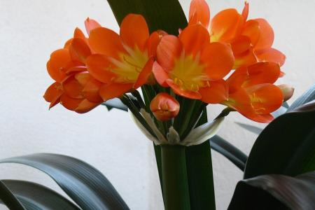 Víte, že některé domácí květiny jsou pro vašeho čtyřnohého člena domácnosti nebezpečné?