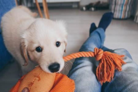 Štěně – nový člen rodiny