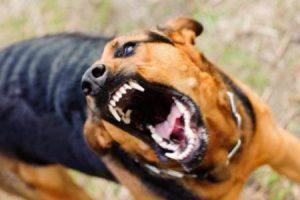 pokousání psem