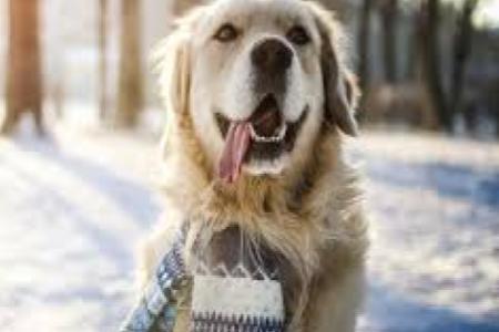 Jak poznat podchlazení psa?