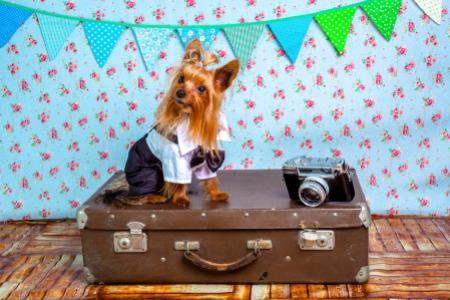 Se psem do zahraničí aneb na co se připravit