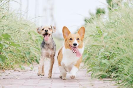"""EnteroZOO: domácí veterinární """"záchranka"""""""
