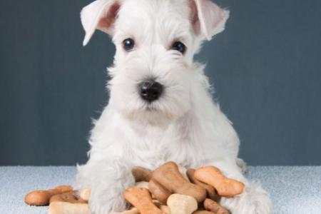 Jaké pamlsky jsou pro psa vhodné akteré ne?