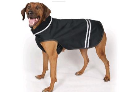Psí oblečky nejsou nutné