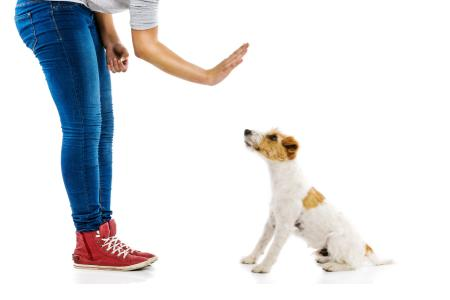 Základní výcvik psa