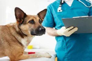 zdraví pes - vše o psech