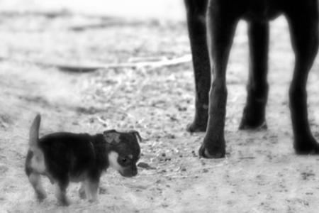 Malý pes avelký svět kolem něj