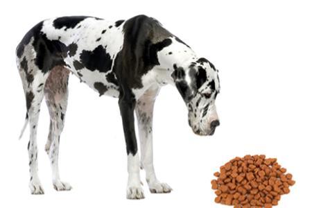 Granule pro velké psy