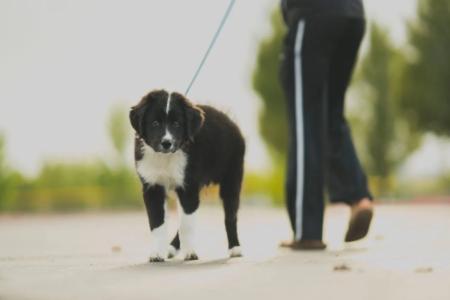 Na procházku se psem můžete vyrazit istylově: kožené obojky avodítka pro psy vhlavní roli