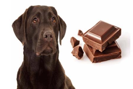Psi ačokoláda