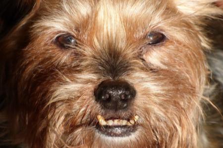 Ochrana psích zubů