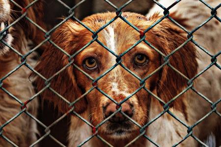 Každý může pomoci: Jak zlepšit život psů vútulcích?