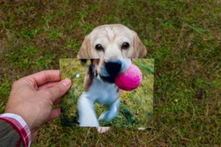 Psí roky, jak převést věk vašeho psa na roky člověka