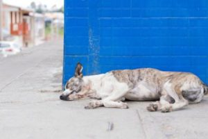 jak zabranit dehydrataci psa