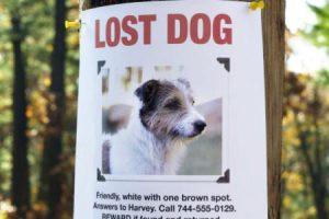 ztracený pes