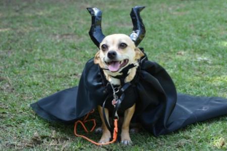 10 nejlepších halloweenských kostýmů pro malé psy