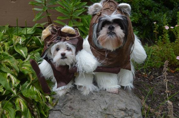 kostym pro psa