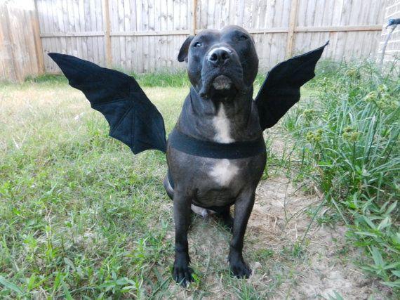 kostym pro psy