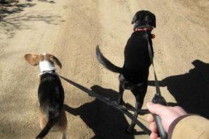 jak vybrat dvojite voditko pro psa