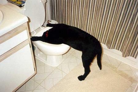 Co dělat, když pes zvrací