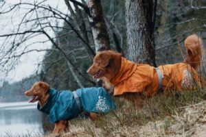 plastenky peo psy