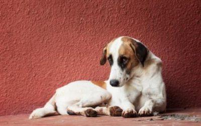 Pojištění psů proti škodám