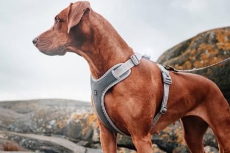 Jak vybrat postroj pro psa