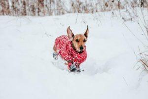 jak vybrat zimní obleček pro psa