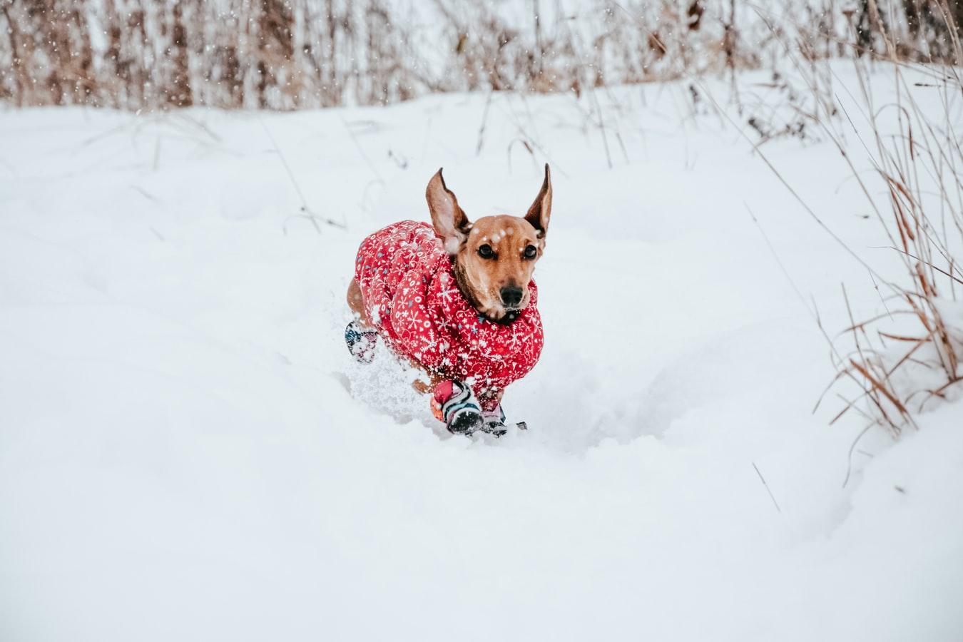 Zimní oblečky pro psy