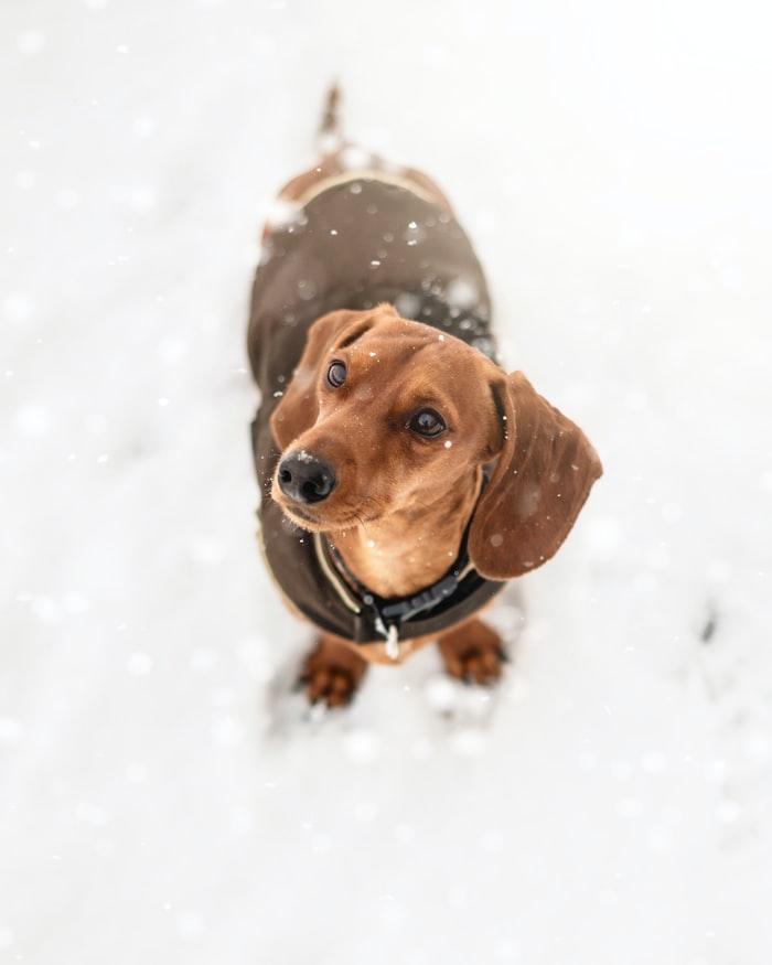 teply obleček pro psa