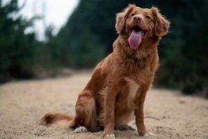 Velikost psa v kohoutku