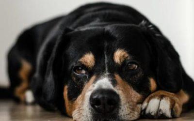 Sedativa pro psy