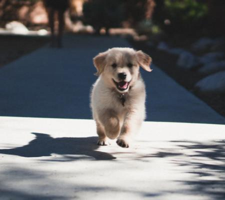 Darovací smlouva na psa