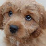 Kupní smlouva na psa s PP