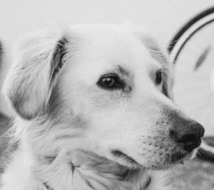 krematorium pro psi