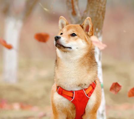 Reflexní prvky pro psy
