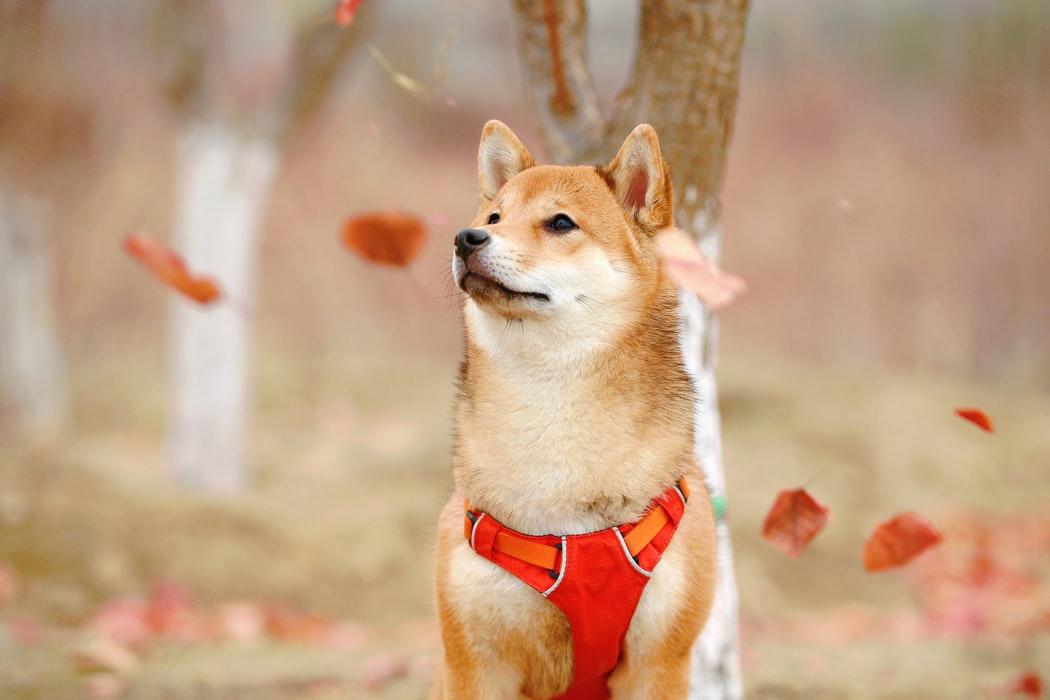 Reflexní prvky pro psa
